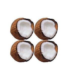 Monkey Mischief Coconuts Classic Accents